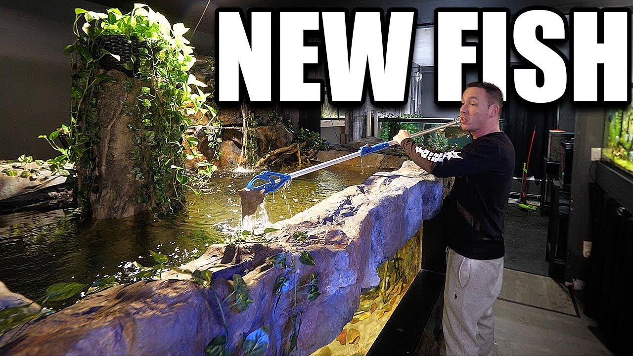 NEW FISH for the 2,000G aquarium!