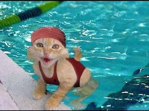 Roligt, Klyftigt Katter, Bästa Husdjur, Hund Trick, Katt Och Hund, Sällskapsdjur Agility