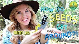 How do seeds get around?! (in MACRO!) | Maddie Moate