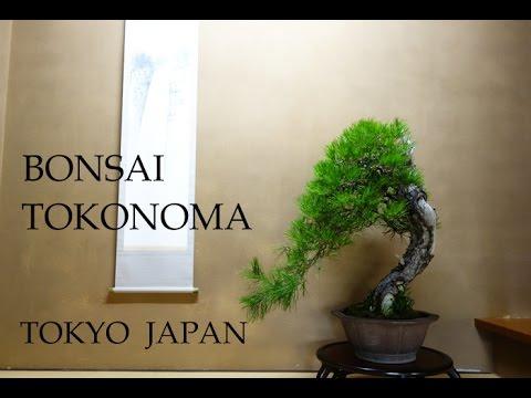 Bonsai Amp Tokonoma Alcove Tokyo Japan 床の間と盆栽 Youtube