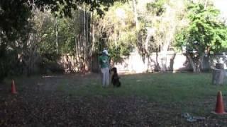 Dog Training Off Lead Recall Demo Distractions Darwin 10 13 09