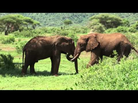 The wildlife in the lake Manyara reserve (Tanzania)