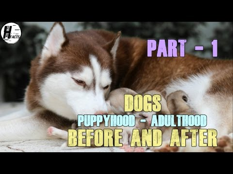 PART -1 | DOGS. Puppy - Adult | BEFORE AND AFTER