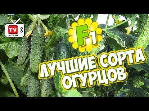 Хитсад ТВ - Семена огурцов ТОП7 🌱 ОГУРЕЦ обзор семян F1 которые не оставят вас без урожая