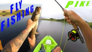 How To FLY FISH Northern Pike From A Kayak Fish FRENZY Catching Jack
