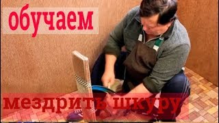 видео Как снять шкуру с лисы и её первичная обработка