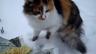 Кошка в три цвета. Mom with a child eat. Кошка с котенком кушают.