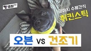 강아지 수제간식 만들기 (오븐 vs 건조기) [루사의 …