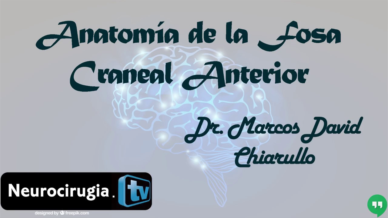 5 Anatomía de la fosa craneal anterior - YouTube