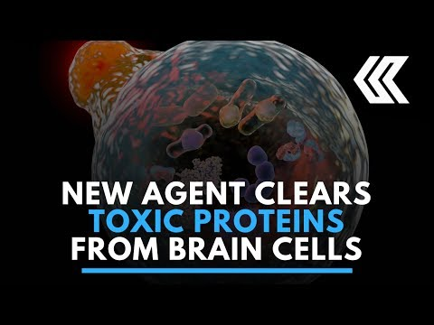 New chemical that clears toxic proteins from brain cells identified