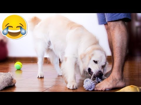 My Funny Dog Protects and Saves His Toys From Me