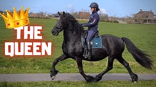 The Queen's last ride before she had her foal. QueenUniek loves it! | Friesian Horses