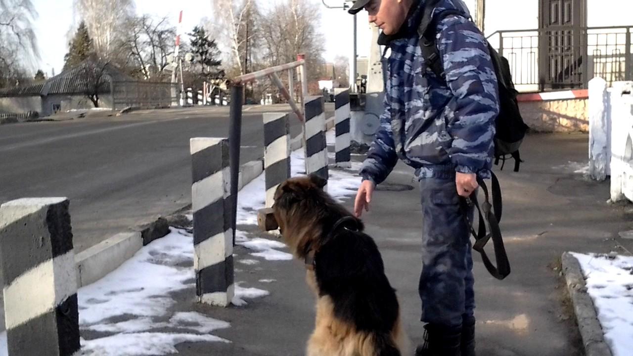 Тренировка с собакой на улице.