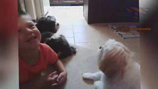 FUN CHALLENGE  Try NOT to laugh   Funny & cute dogs and kids😆😜