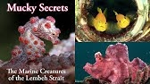 Mucky Secrets (full) - The Marine Creatures of the Lembeh Strait