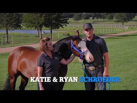 Equiflight – International Horse Export & USDA Quarantine Facility