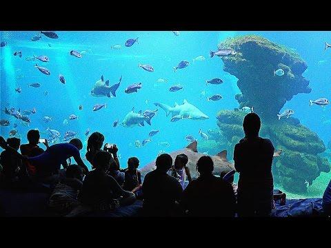 Palma Aquarium Mallorca In 4K (Ultra HD)