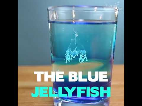 Blue button jelly washing ashore on beaches from YouTube · Duration:  1 minutes 42 seconds