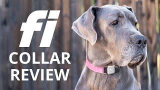 Fi Dog Collar Review (2020 Update!)