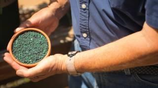 How to Grow Healthy Gardenias : Garden Savvy