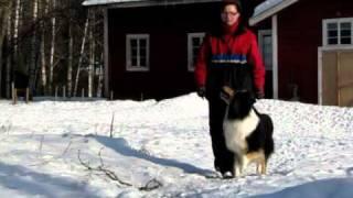 Arttulan - Dog Training - Kata