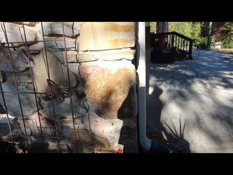 Standard Schnauzer  Dogs Playing