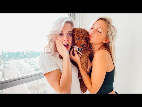 Surprising My Best Friend With Her Dream Dog! *EMOTIONAL*