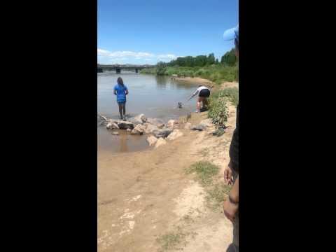 Luna swimming in the Rio Grande