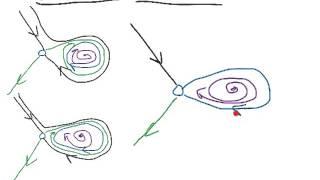 C14 Homoclinic bifurcation.