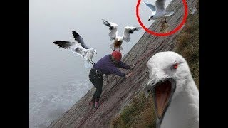 SEAGULLS Are Such FUNNY BIRDS - Cute And Funny Seagull Videos Compilation 2018 [BEST OF]