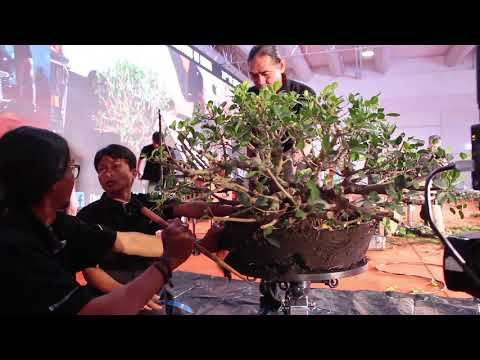 Second Bonsai demo by Rudy Najaon