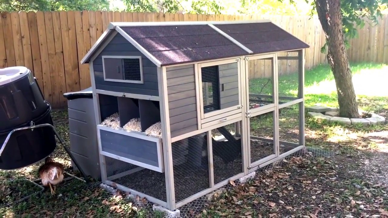 Review Of Innovation Pet Chicken Coop