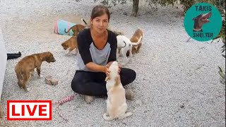 Elli is leaving and she got her 3 foster puppies adopted in Germany! Thank you Elli - Takis Shelter