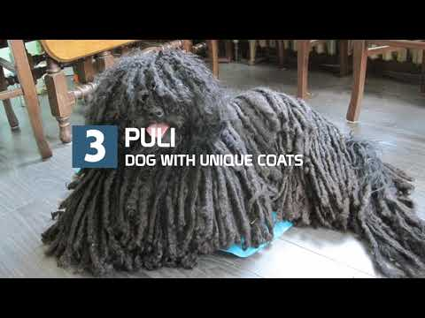 10 Dogs With Most Unique Coats