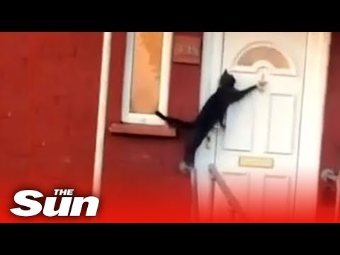 Robin Rock - This cat knows the secret of getting back inside