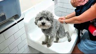 Poop Dog, Death Machine