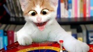 ПРИКОЛЫ с КОТАМИ - ТОПовая подборка! ????Часть 2 Смешные коты и кошки