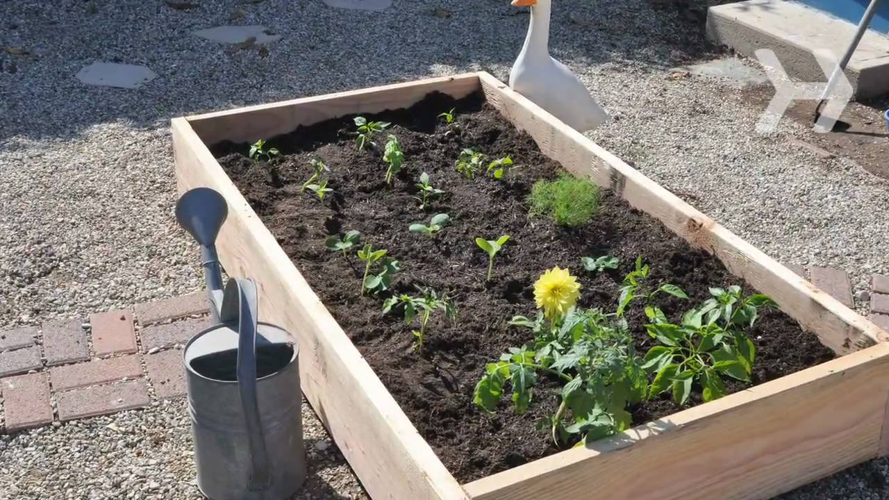Kitchen Garden Planter How To Plant A Vegetable Garden Youtube