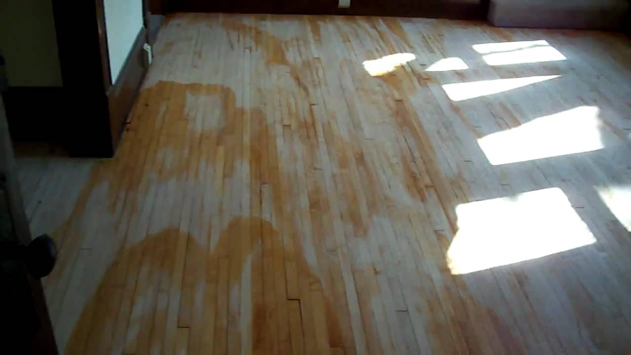 Water Popping Maple Hardwood Floors In Edina