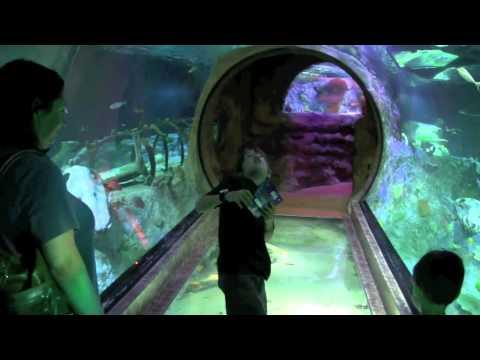 Sea Life Aquarium Grapevine 2011