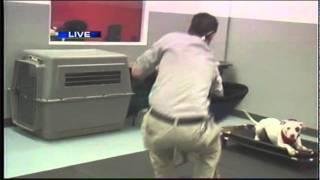 Dog Attacks Reporter