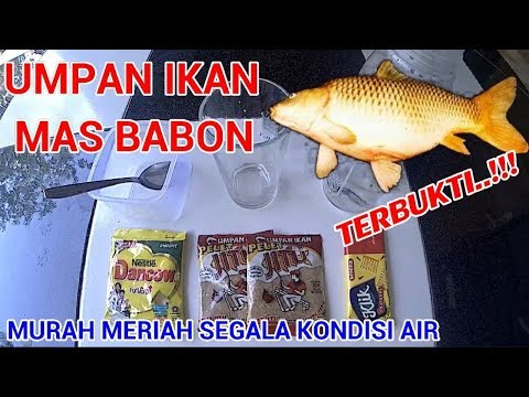 Umpan Murah Cuma 11 Ribu Ampuh Untuk Babon Dan Ikan Merah Youtube