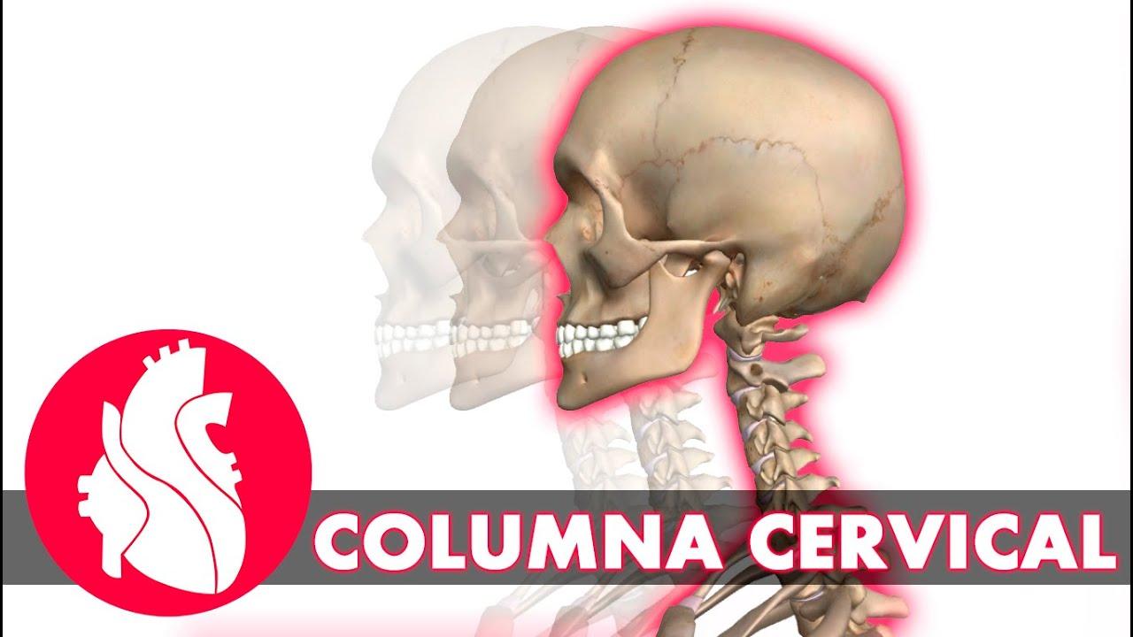 3D] Osteología de columna - Columna cervical - YouTube