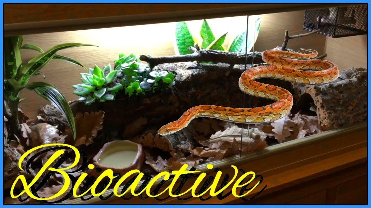 Bioactive Corn Snake Vivarium Youtube