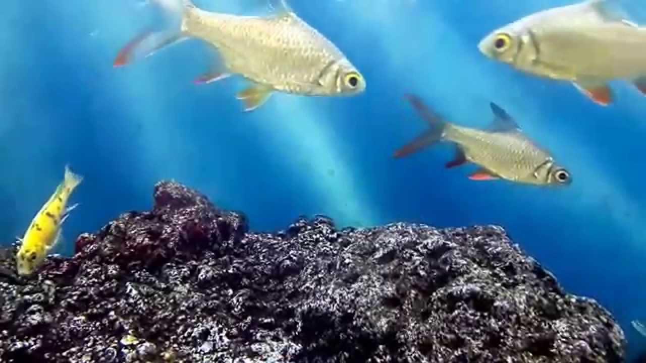 Fish aquarium in kurla - Beautiful Fish World In Aquarium At Inorbit Mall Malad West Mumbai