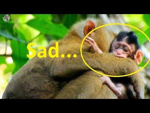 P:1 Sadness newborn Janet gotten Bonita stole from Jane | Pity Newborn baby Janet hungry& afraid |