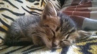 Meow - kitty - котенок кусается