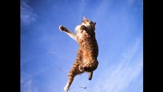 Летающие и падающие коты!Видео приколы.