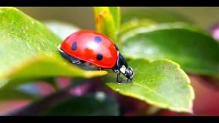 Класс насекомые по зоологии