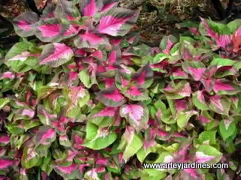 Los colores del jard n dise os con plantas youtube for Catalogo de flores de jardin